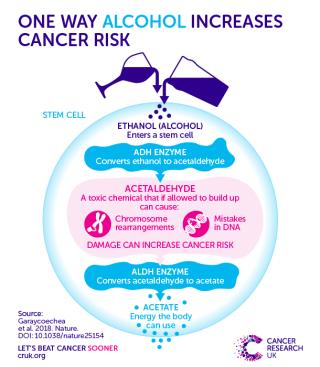 Alcohol cancer mechanism